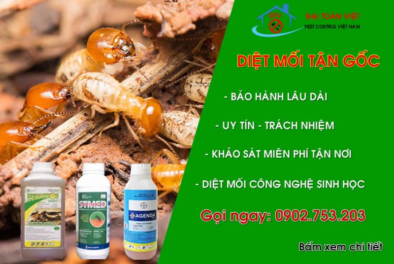 Diệt mối và côn trùng tận gốc - Đại Toàn Việt